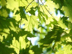 東京都大田区サロン あなたの心と身体を解放させ 明日への活力となる場所【翠(すい)】